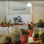 expo cactus villa maria