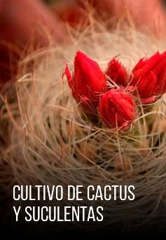 combo-cultivo-de-cactus