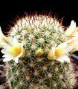78a95cdcb49860f37c1091ef567458be--cactus